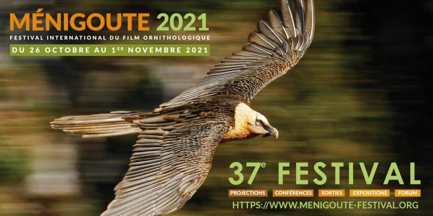 Visuel affiche Ménigoute 2021 Festival International du Film Ornithologique du 26 octobre au 1er novembre 2021 photo d'un Gypaète barbu en vol de profil