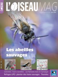 Couverture de l'oiseau magazine n°141