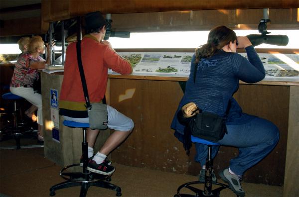 Public en train d'observer la faune du site depuis l'observatoire équipé en longues-vues